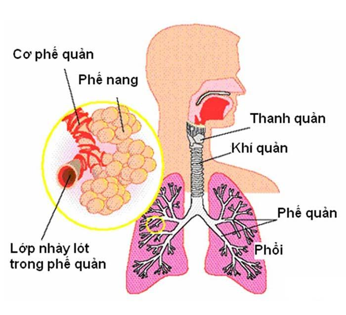 Đặc điểm giải phẫu bộ phận hô hấp trẻ em