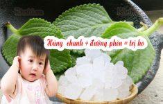 Bài thuốc húng chanh quất đường phèn trị ho tiêu đờm cho bé1