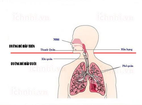 Mẹo chăm sóc trẻ sơ sinh viêm đường hô hấp trên hiệu quả