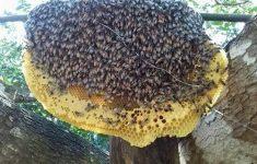 Hướng dẫn cách ngâm mật ong tốt cho sức khỏe