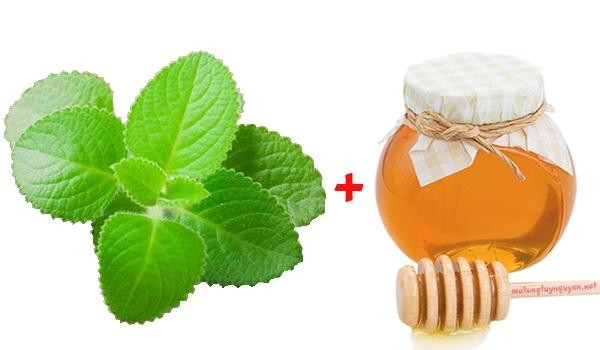 Chữa ho với húng chanh mật ong