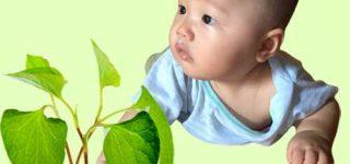 2. Phương pháp chữa ho cho trẻ sơ sinh bằng rau diếp cá