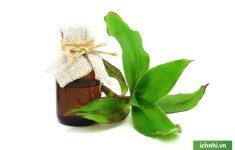 Kết hợp cây lược vàng và giấm chuối chữa viêm họng
