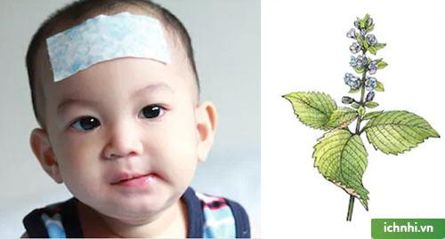 Một số bài thuốc hạ sốt cho trẻ bằng lá tía tô